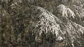 Heavy snowfall over fir trees stock video footage