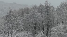 Heavy snowfall. Snow-covered forest in winter. Flying snowflakes. Full HD stock video