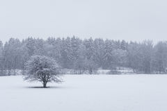 Heavy snowfall at the Swedish forest nearby Stockholm Royalty Free Stock Image
