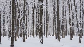 Heavy Snowfall in winter. Beautiful winter landscape with snow covered trees. stock video footage