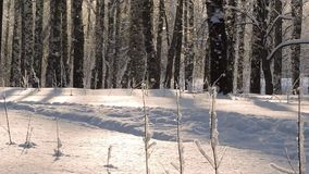 Heavy Snowfall in winter. Beautiful winter landscape with snow covered trees. stock video