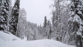 Heavy Snowfall in A Winter Forest. Altay, Siberia stock video