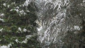 Heavy snowfall stock video footage