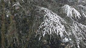 Heavy snowfall stock video