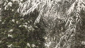 Heavy snowfall in winter stock footage