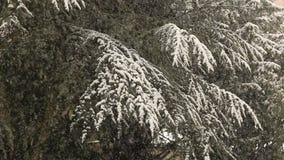 Heavy snowfall in winter stock video