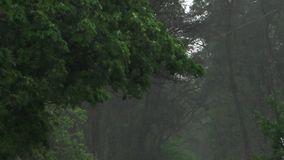 Heavy rain in spring. Heavy spring rain floods the streets with cars on the road and people passing by stock footage