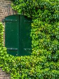 Heavy steel shutters in the wall on which ivy grows royalty free stock images