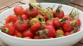 Heavy Stemmed Bush Tomatoes In Bowl stock footage