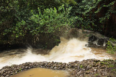 Heavy swollen river after a tropical rainstorm Stock Images