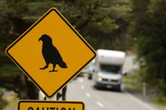 Heavy traffic leaving the kea danger zone Royalty Free Stock Photo