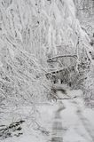 Fallen trees on road in winter snow storm. Heavy wet snow and fallen trees on street in northeast winter snow storm Quinn royalty free stock image