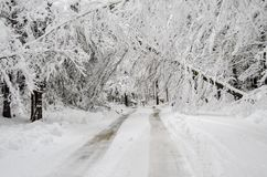 Fallen trees on road in winter snow storm royalty free stock image