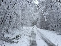 Fallen trees on road in winter storm Quinn Royalty Free Stock Image