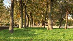 Heavy wind in autumn park stock video