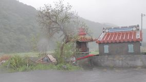 Heavy wind and gusts of rain blowing tree next to Chinese temple   during a typhoon stock footage