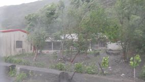 Heavy wind and gusts of rain blowing trees next to houses  during a typhoon stock footage