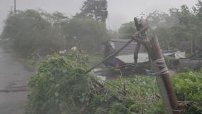 Heavy wind and gusts of rain blowing trees during a typhoon stock video