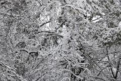 Heavy Winter Snow on Trees.  stock photo