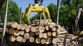 Heavy work equipment loading with clipper cut logs Royalty Free Stock Photo