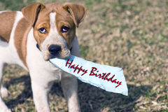 Heb een gelukkige verjaardag Royalty-vrije Stock Afbeeldingen