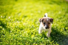 Heb een nieuw puppy royalty-vrije stock foto
