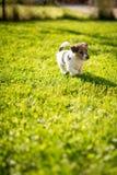Heb een nieuw puppy stock foto