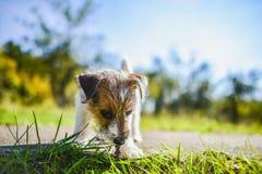 Heb een nieuw puppy Stock Foto's