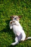 Heb een nieuw puppy Royalty-vrije Stock Fotografie