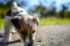 Heb een nieuw puppy Royalty-vrije Stock Foto's