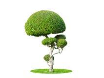 Hebanu drzewo odizolowywa obrazy stock