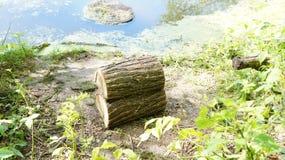 Hebben gegevend hennep aan de kust van de vijver Stock Afbeelding