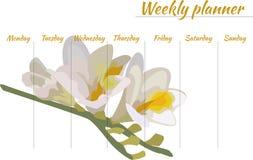 Hebdomadaire avec la belle fleur sur le fond Photographie stock
