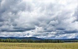Heber Overgaard, el condado de Navajo, bosque del Estado de Sitgreaves, Arizona, Estados Unidos Imagen de archivo libre de regalías
