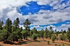 Heber Overgaard, el condado de Navajo, bosque del Estado de Sitgreaves, Arizona, Estados Unidos Foto de archivo