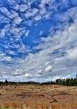 Heber Overgaard, la contea di Navajo, foresta nazionale di Sitgreaves, Arizona, Stati Uniti immagini stock libere da diritti