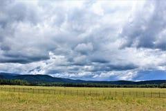 Heber Overgaard, la contea di Navajo, foresta nazionale di Sitgreaves, Arizona, Stati Uniti Fotografia Stock