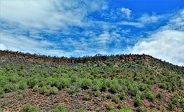 Heber Overgaard, Navajo County, Sitgreaves-staatlicher Wald, Arizona, Vereinigte Staaten lizenzfreie stockfotos