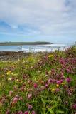 Hebridean Machair Stock Images