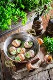 新鲜的蜗牛用大蒜黄油和hebrs 免版税库存照片
