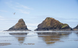 Heceta Beach. A lone gull glides across a blue sky over Heceta Beach on the Oregon coast between Florence and Yachats Stock Image