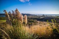Heceta głowy latarni morskiej stanu parka Sceniczny punkt widzenia w Florencja, Oregon Obrazy Royalty Free