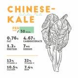 Hechos de la nutrición de la col rizada de Chenese o del bróculi chino, vegetales ilustración del vector