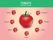 Hechos de la nutrición del tomate, fruta del tomate con la información, vector del tomate Imagen de archivo libre de regalías