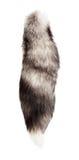 Heck des silbernen Fuchses Stockbild