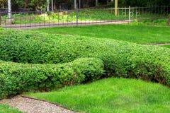 Hecke der Buchsbaum geschorenen Form des Landschaftsentwurfs lizenzfreie stockbilder