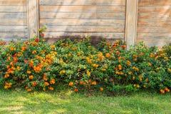 Hecke des Blumen-Betriebs-und Holz-Hintergrundes stockbilder