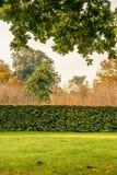 Hecke in einem Park lizenzfreie stockbilder