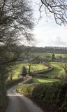 Hecke entlang einem Feldweg in Devon England Großbritannien Lizenzfreie Stockbilder