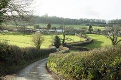 Hecke entlang einem Feldweg in Devon England Großbritannien Stockfoto